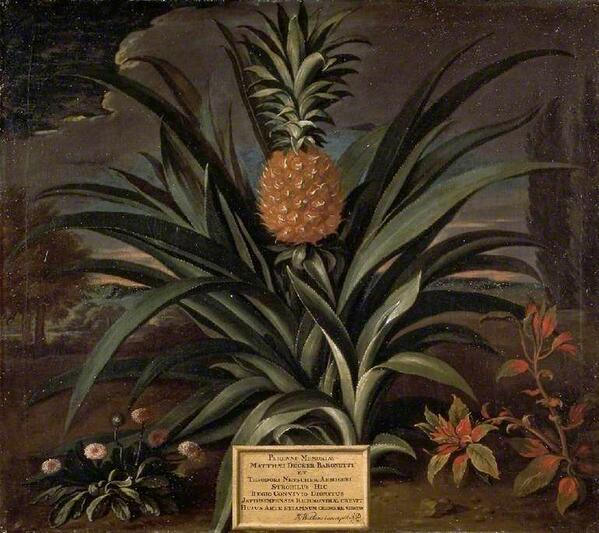 Pineapple by Theodorus Netscher, 1720