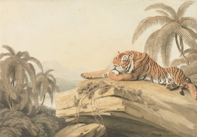 "A Tiger Resting: the frontispiece for ""Oriental Field Sports"", 1805, Samuel Howitt. Yale Center for British Art, Paul Mellon Collection."
